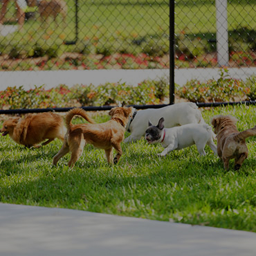 Large Dog Park at The Ridge at Blackmore Apartments